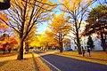 北海道大学(Hokkaido University) - panoramio.jpg