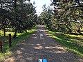 古志の松原内を通る富山県道375号富山朝日自転車道線.JPG