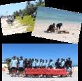 太平島島區自然環境維護.png