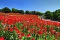 昭和記念公園 - panoramio (9).jpg