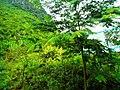 桂林市冠岩景区景色 - panoramio (24).jpg
