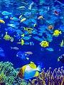 熱帯魚 (174641799).jpeg