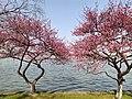 玄武湖春景20200222 17.jpg