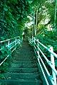 綱島公園 - panoramio (6).jpg