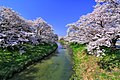 藤田川 - panoramio.jpg