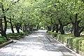 원광대학교 수덕호주변길 (Wonkwang UNIV) - panoramio.jpg