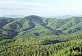 02-35-01, forest - panoramio.jpg