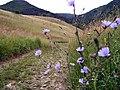 044 81 Veľká Lodina, Slovakia - panoramio.jpg