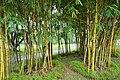 050 Bamboo (25595973697).jpg