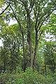 1Копилівський парк біля садиби.jpg
