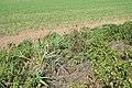16 Hungersee - Breitunger Tal, Bewuchs mit Schilf.jpg