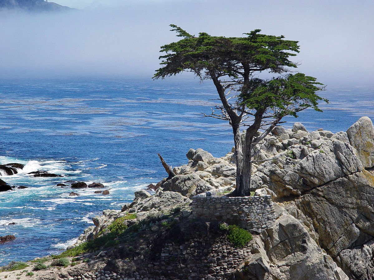 The Lone Cypress and 17-Mile Drive in Pebble Beach - LA Times