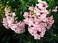 1848 - Salzburg - Mirabellgarten - Flowers.JPG