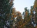 2005. Донецк 023.jpg
