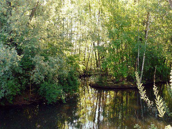 Biotop in der Mündung des Goldbachs in die Pegnitz