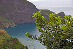 2011-03-05 03-13 Madeira 032 Faial (5542732857).jpg