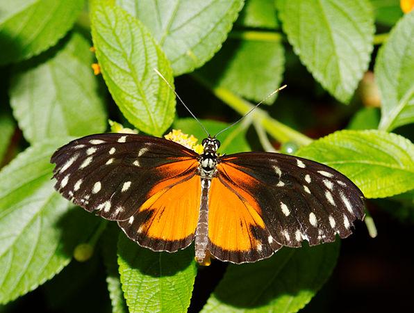 2011-08-08 15-05-34-papillon-hunawihr.jpg