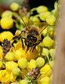 2012-04-02 14-27-39-abeille.jpg