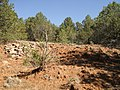 2013 - Gully Headcut Protection from 1950's to 1980's, Center Left, More Recent Sheet Erosion to the Right, the Former Forked Lightning Ranch, Pecos National Historic Monument, NM - panoramio.jpg