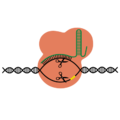 201412 CRISPRCAS9pink.png