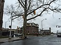 2016-02-23 12 52 47 A large street tree at the intersection of North Clinton Avenue and East State Street (Mercer County Route 635) in the Ewing-Carroll section of Trenton, New Jersey.jpg