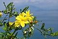 2017-04-10 04-14 Gardasee 179 Sirmione (33571658823).jpg