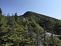 2017-09-11 11 30 09 View east along the Maple Ridge Trail at about 3,500 feet above sea level on the western slopes of Mount Mansfield within Mount Mansfield State Forest in Stowe, Lamoille County, Vermont.jpg