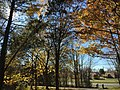 2017-11-23 12 44 46 Trees in late autumn along a walking path in the Franklin Farm section of Oak Hill, Fairfax County, Virginia.jpg