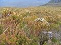 24. Stirling Range in spring.jpg