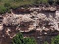 248 Cingles del pla d'Iglésies, estrats de roca.JPG