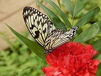 252 Schmetterlingspark Uslar.JPG