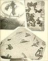 2nd International congress of entomology, Oxford, August, 1912 (1913-14) (16457173657).jpg