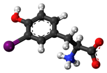 Ball-and-stick model of the 3-iodotyrosine molecule as a zwitterion
