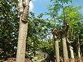 3428Poblacion, Baliuag, Bulacan 53.jpg