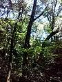 35-211-5004 Казавчинські скелі Лютинська 179.jpg