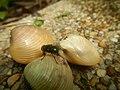 4087Ants Common houseflies foods delicacies of Bulacan 57.jpg