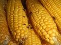 4690Common houseflies and delicacies Bulacan foods 29.jpg