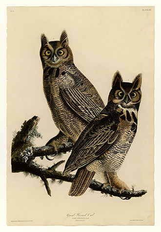The Birds of America - Image: 61 Great Horned Owl