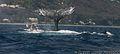 846-Baleines St Gilles le 250911 HD11 copyright.jpg