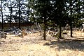 A@a gypsou Cemetery 1 cyprus - panoramio.jpg