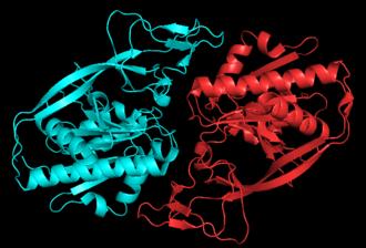 Aspartoacylase - Image: ASPA dimer