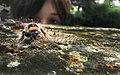 A Bumblebee A Curious Child (214083229).jpeg