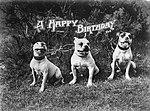 A Happy Birthday (8029079580).jpg