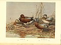 A natural history of the ducks (6276614828).jpg