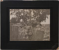 A northern Alberta apple tree (HS85-10-16449).jpg
