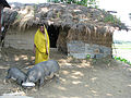 A poor village woman of Bangladesh.jpg
