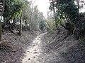 A sunken bridleway - geograph.org.uk - 1157608.jpg