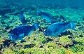 Abrolhos Marine National ParkRobertoCostaPinto06.jpg