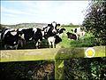 Access denied - Flickr - BazzaDaRambler.jpg