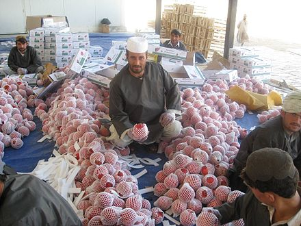 Workers processing pomegranates (anaar), which Afghanistan is famous for in Asia Afghan pomegranate processing.jpg